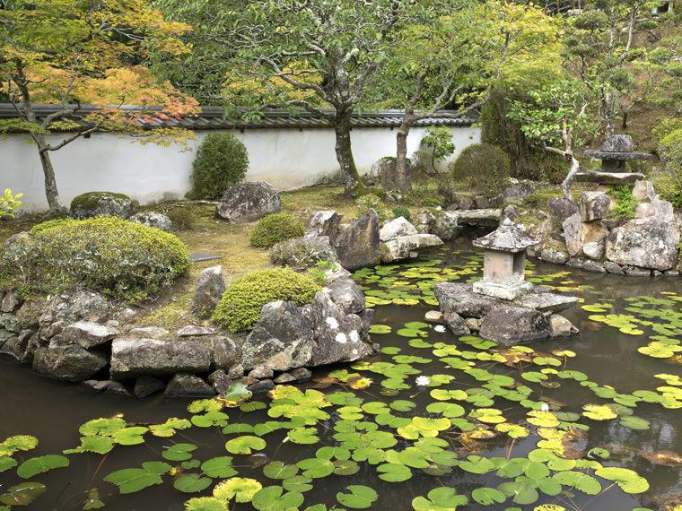 茶房かのんの池